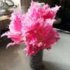 チューリップ「ハウステンボス」 - 切り花