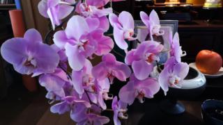 ピンク系コチョウラン(仏壇へ)