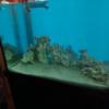 海水水槽 - デッドロック