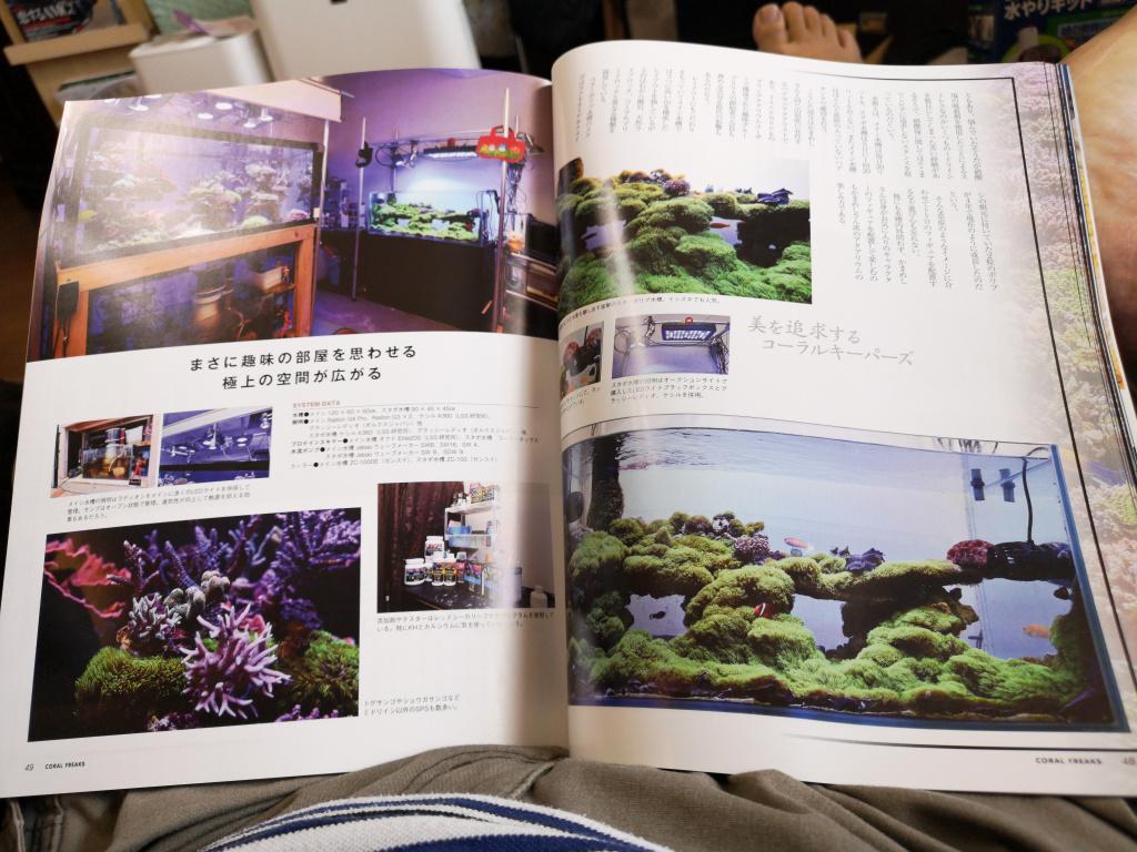 スターポリプ水槽 - 雑誌「コーラルフリークス」