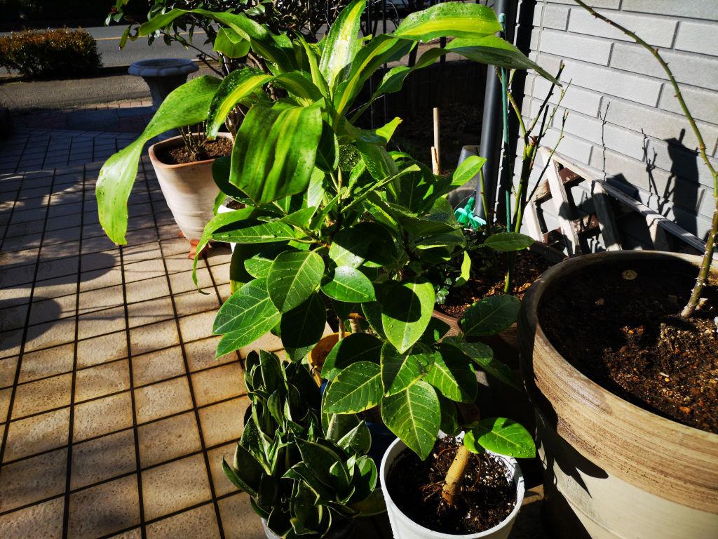 観葉植物:その 2