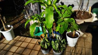 観葉植物:その 1